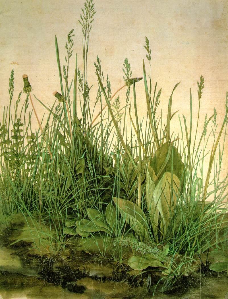 Albrecht Durer Great Piece of Turf